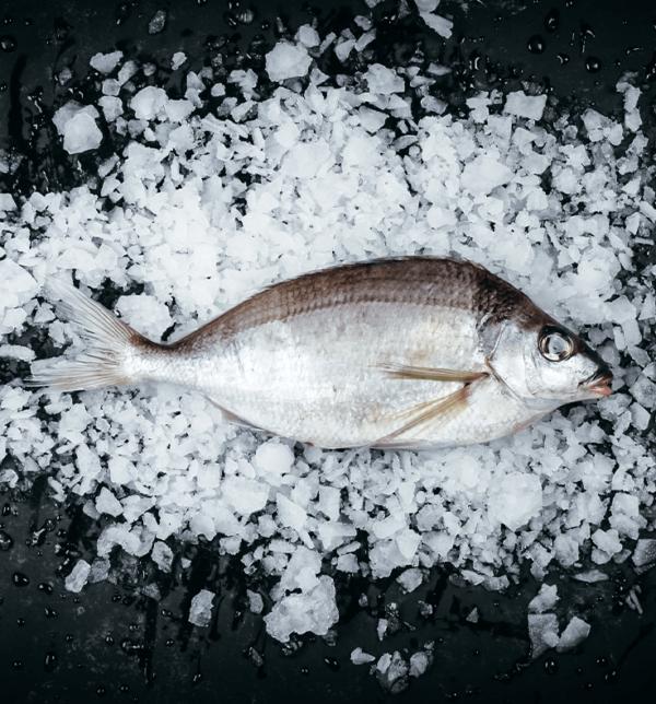 Tarakihi Whole Fresh Fish