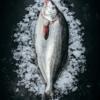 Moki Whole Fresh Fish