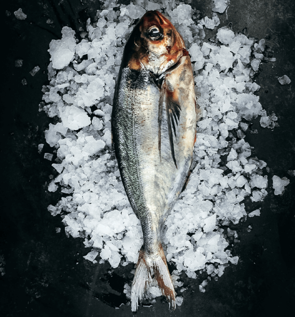 Warehou Whole Fresh Fish